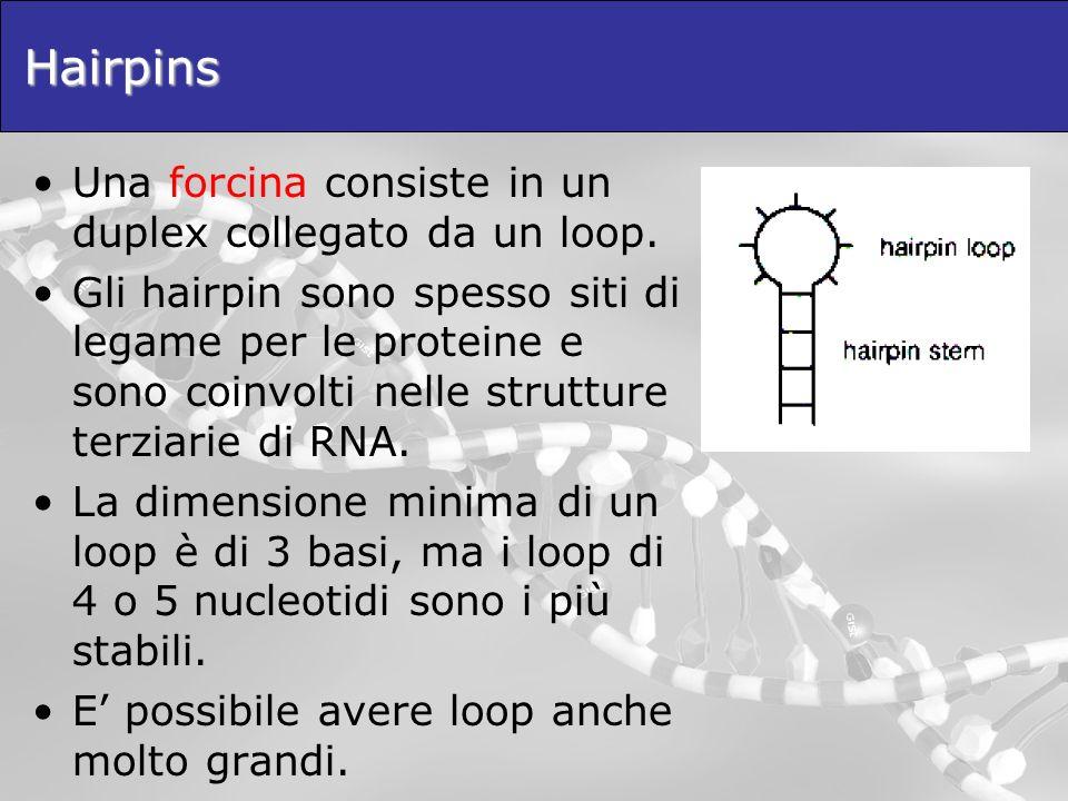 Hairpins Una forcina consiste in un duplex collegato da un loop. Gli hairpin sono spesso siti di legame per le proteine e sono coinvolti nelle struttu