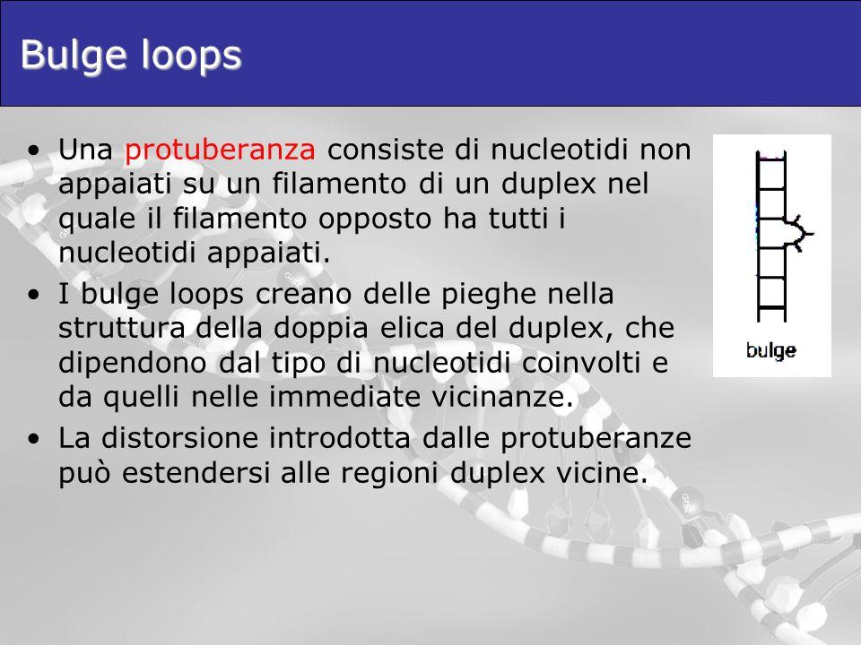 Bulge loops Una protuberanza consiste di nucleotidi non appaiati su un filamento di un duplex nel quale il filamento opposto ha tutti i nucleotidi app