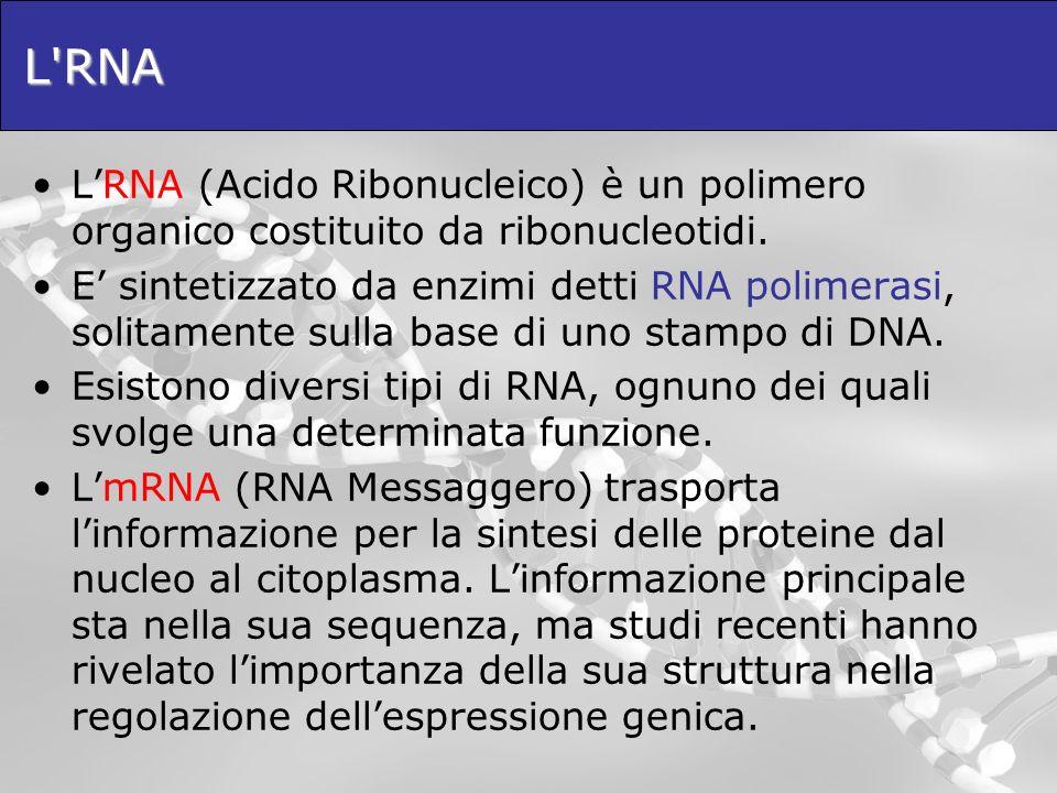 L'RNA LRNA (Acido Ribonucleico) è un polimero organico costituito da ribonucleotidi. E sintetizzato da enzimi detti RNA polimerasi, solitamente sulla