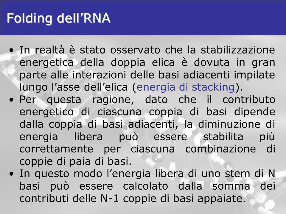 Folding dellRNA In realtà è stato osservato che la stabilizzazione energetica della doppia elica è dovuta in gran parte alle interazioni delle basi ad