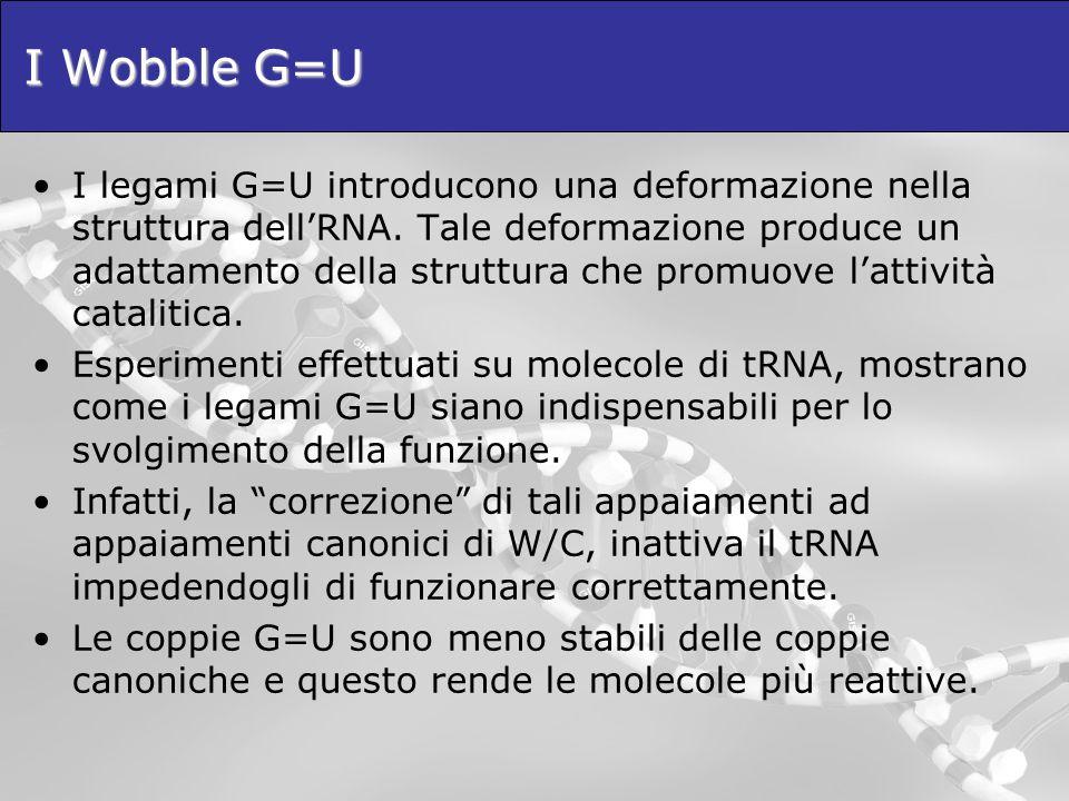 I Wobble G=U I legami G=U introducono una deformazione nella struttura dellRNA. Tale deformazione produce un adattamento della struttura che promuove