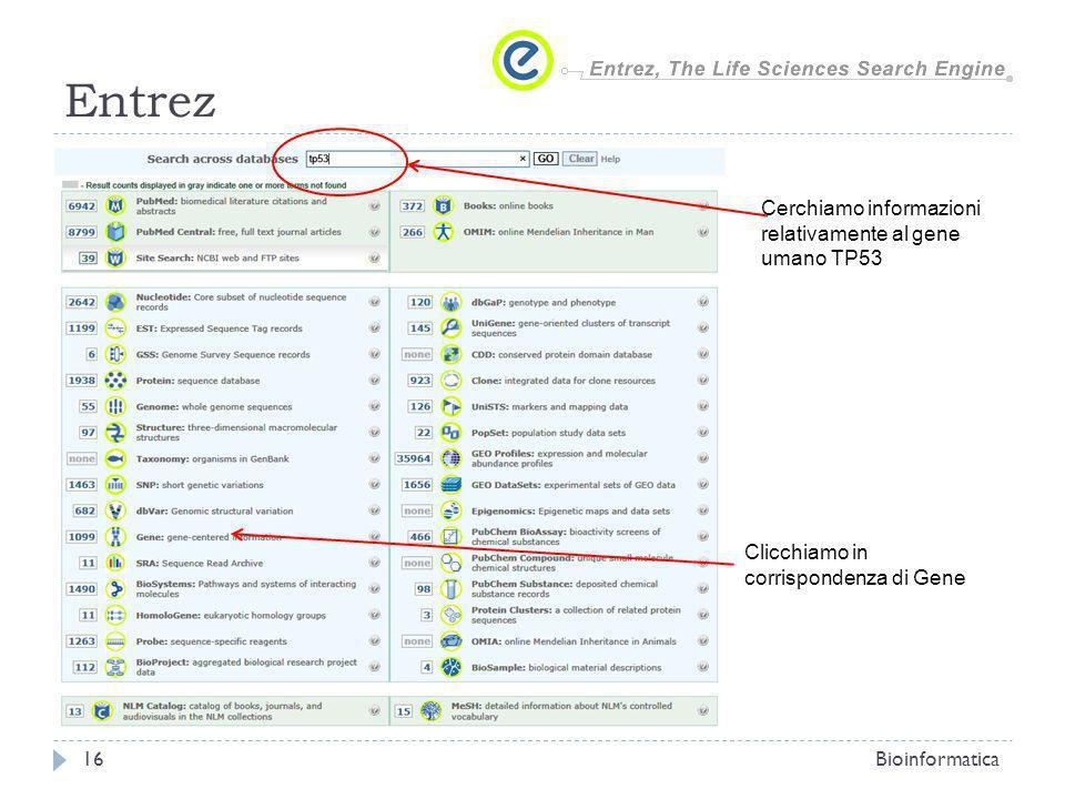 Entrez Bioinformatica16 Cerchiamo informazioni relativamente al gene umano TP53 Clicchiamo in corrispondenza di Gene