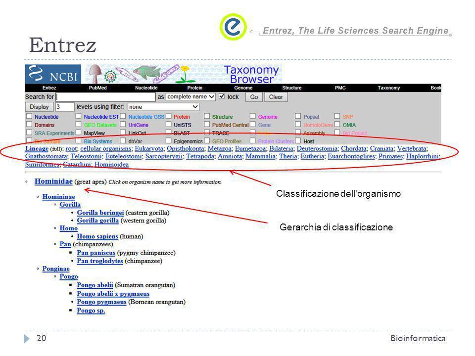 Entrez Bioinformatica20 Classificazione dellorganismo Gerarchia di classificazione
