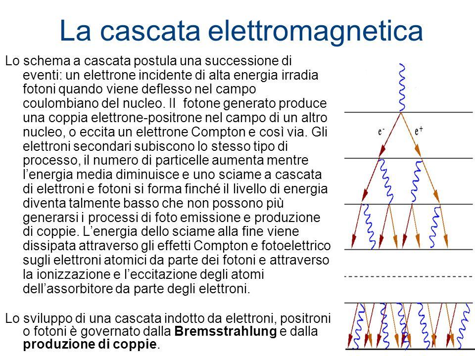 La cascata elettromagnetica Lo schema a cascata postula una successione di eventi: un elettrone incidente di alta energia irradia fotoni quando viene
