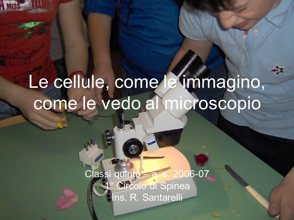 Le cellule, come le immagino, come le vedo al microscopio Classi quinte – a.