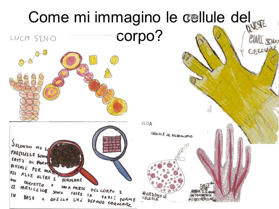Raccogliamo le idee Le cellule sono piccole, molto piccole, non visibili ad occhio nudo possono avere grandezze diverse: ci sono cellule più piccole e cellule più grandi possono essere di forma diversa: a palline, ovali, con la codina… sono attaccate una vicina allaltra… alcune scorrono nei liquidi, come quelle del sangue: globuli bianchi, globuli rossi… sono vive e fatte di molte particelle di materia si nutrono e crescono con i pezzettini di cibo che vengono presi nellintestino e portati dal sangue alle cellule sono capaci di riprodursi e di moltiplicarsi si infiammano e si ammalano muoiono possono essere staminali (Cri) e avere il potere di ricostruire un pezzo di corpo, per esempio la pelle, un osso … se ti fai una ferita, si riproducono e riparano la pelle sono di tanti tipi, che hanno capacità e potenza diversa