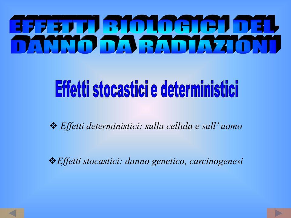 Effetti deterministici: sulla cellula e sull uomo Effetti stocastici: danno genetico, carcinogenesi