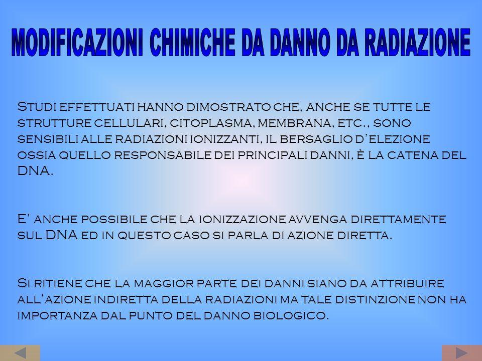 Studi effettuati hanno dimostrato che, anche se tutte le strutture cellulari, citoplasma, membrana, etc., sono sensibili alle radiazioni ionizzanti, i