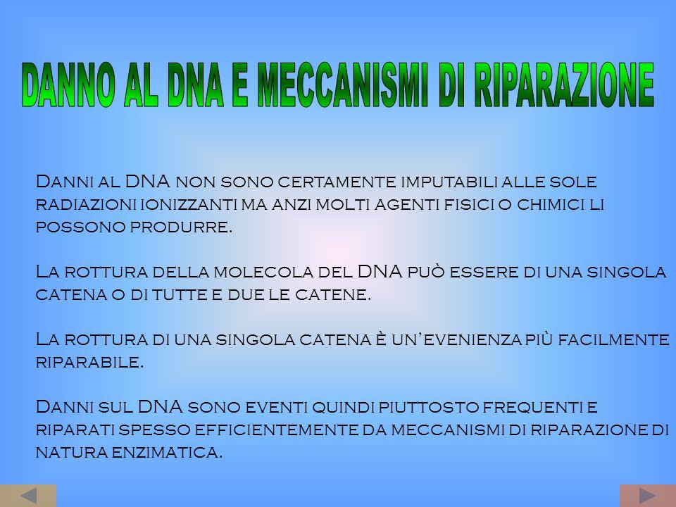 Danni al DNA non sono certamente imputabili alle sole radiazioni ionizzanti ma anzi molti agenti fisici o chimici li possono produrre. La rottura dell