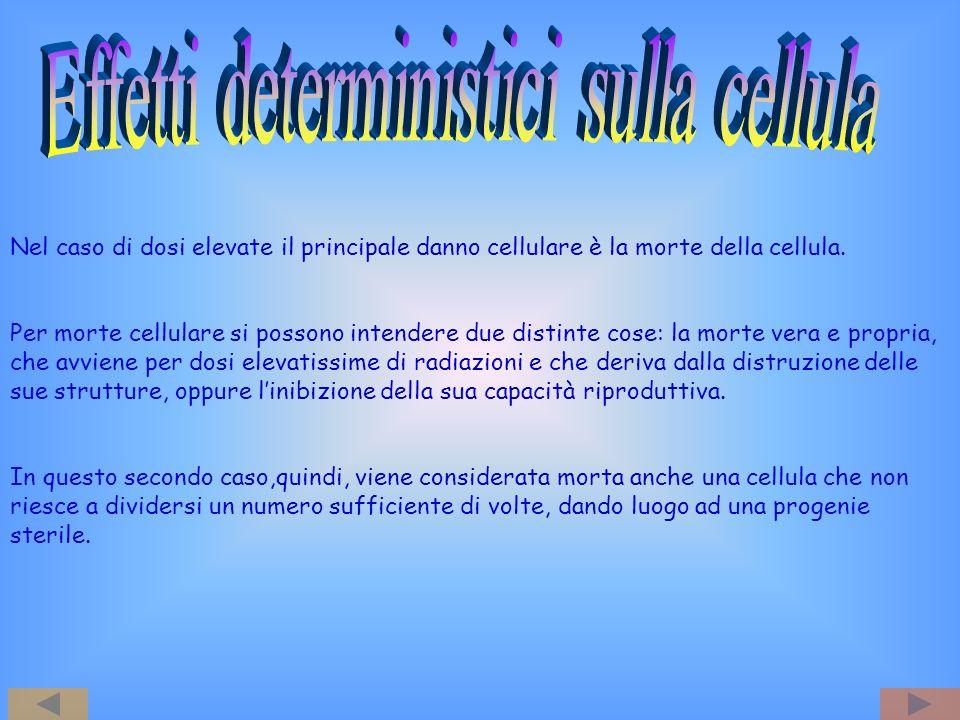 Nel caso di dosi elevate il principale danno cellulare è la morte della cellula. Per morte cellulare si possono intendere due distinte cose: la morte
