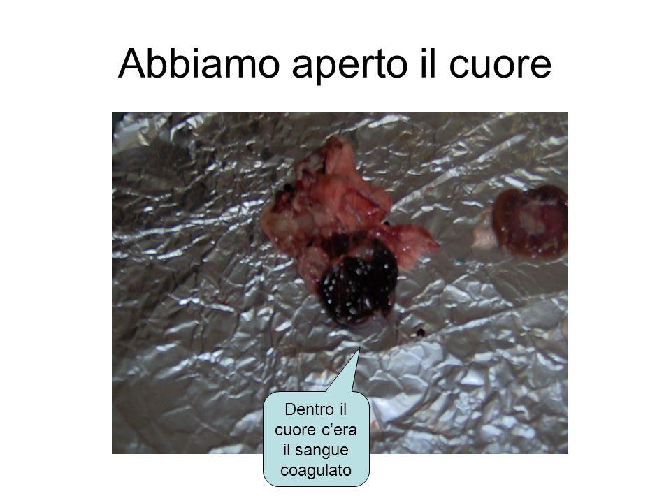 I reni Dentro i reni abbiamo visto le vene