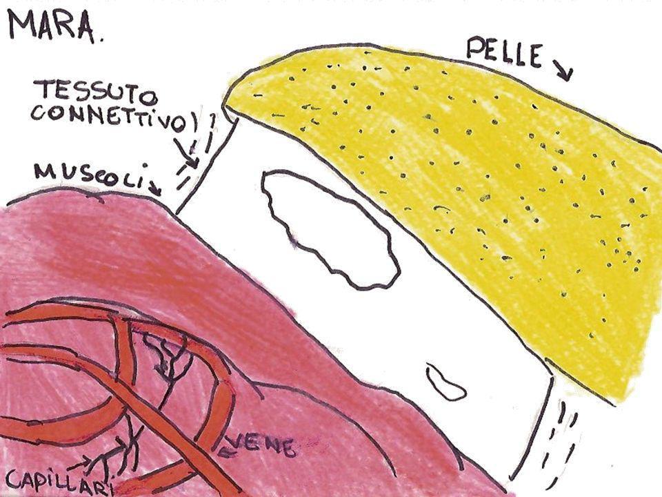 La ghiandola delluropigio … si vede la ghiandola delluropigio, dentro questultima cè una sostanza gialla che i volatili succhiano, perché grazie a questa rendono le loro piume impermeabili.