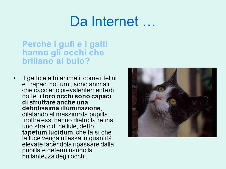Da Internet … Perché i gufi e i gatti hanno gli occhi che brillano al buio? Il gatto e altri animali, come i felini e i rapaci notturni, sono animali