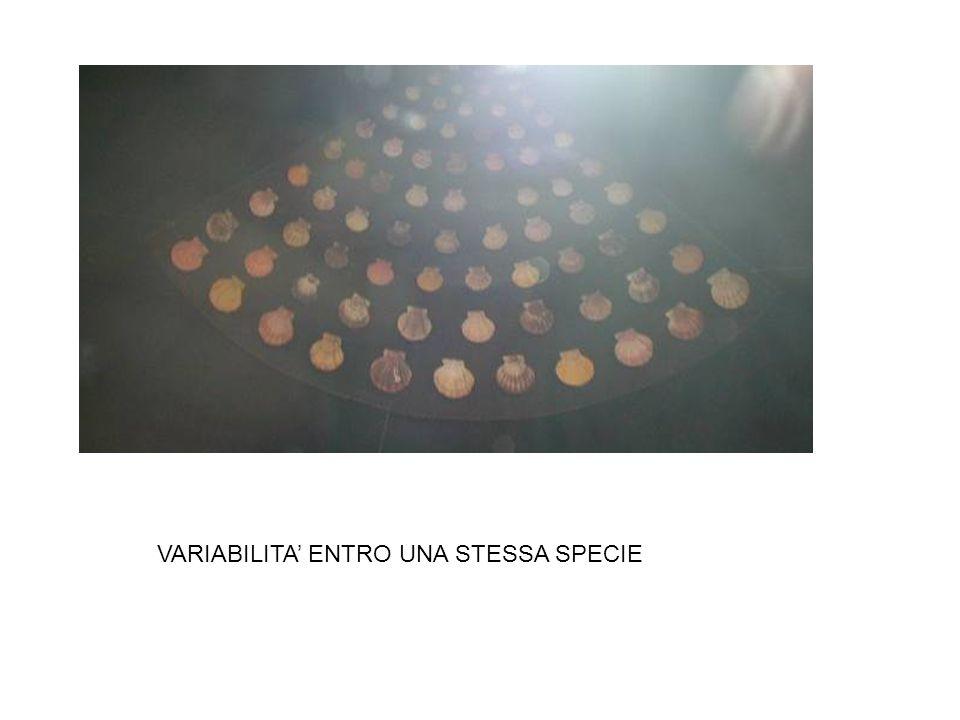 VARIABILITA ENTRO UNA STESSA SPECIE