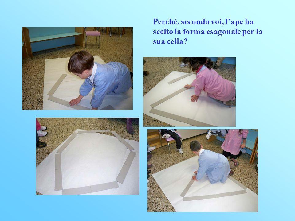 Perché, secondo voi, lape ha scelto la forma esagonale per la sua cella?