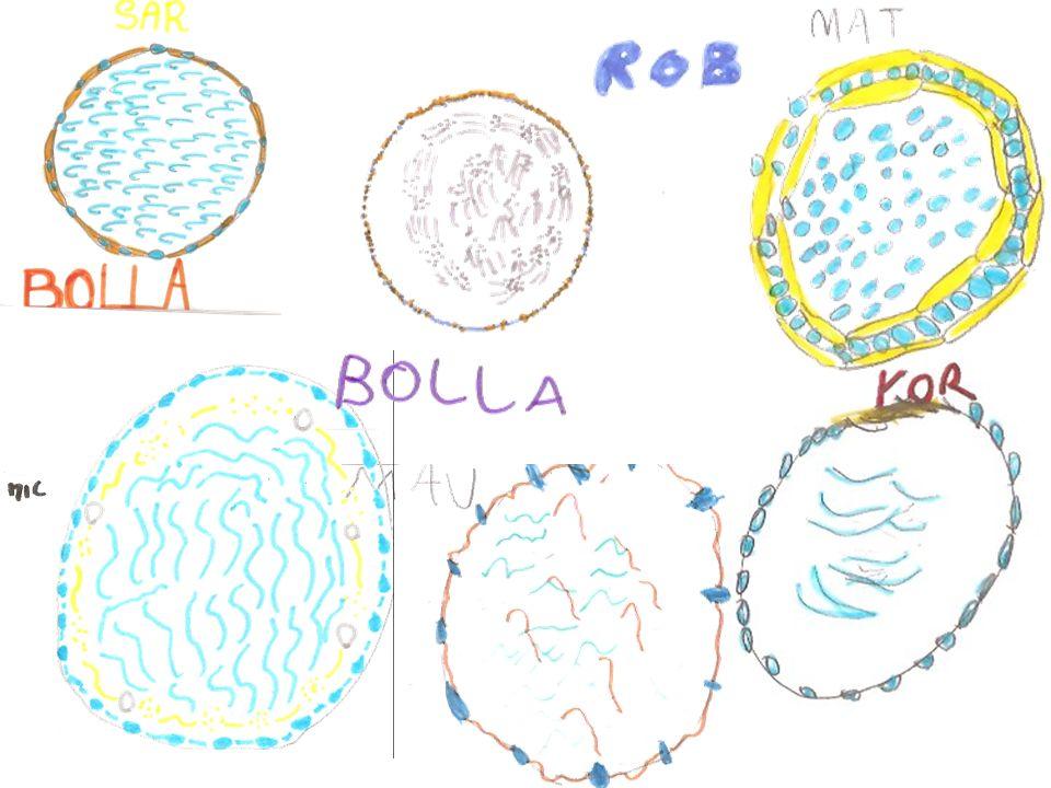 Conclusioni I bambini hanno fatto esperienze con le bolle e hanno capito che per formare una bolla bisogna soffiare o mescolare lacqua con laria.
