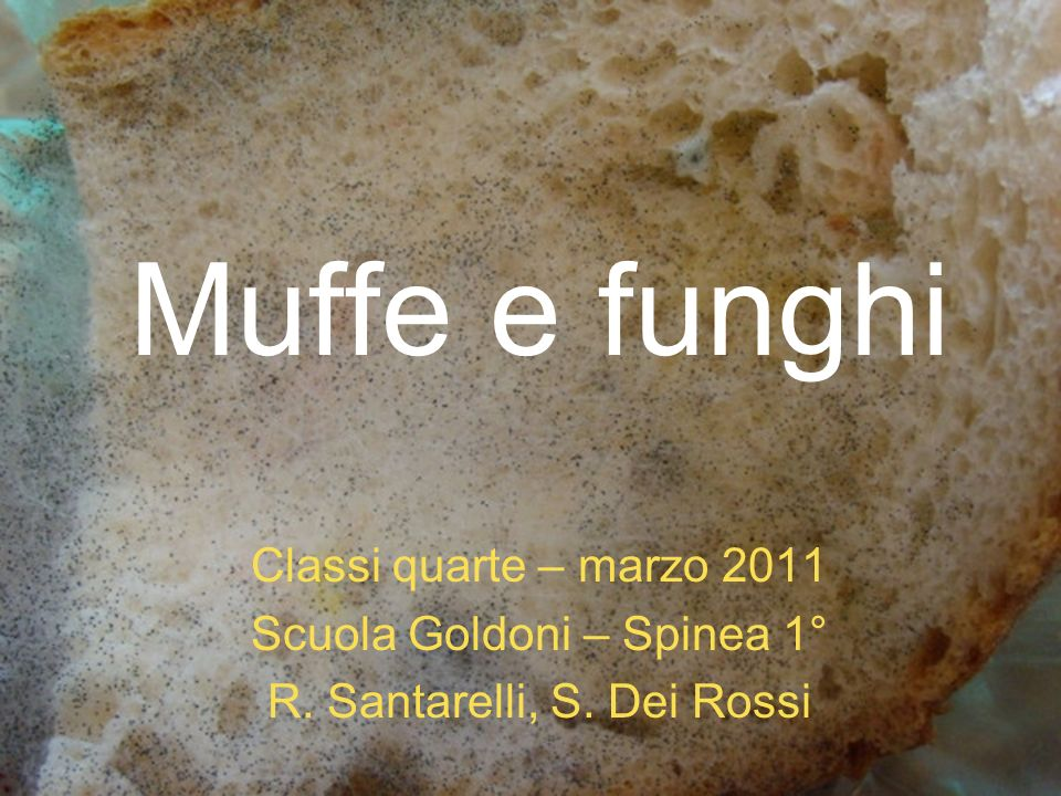 Muffe e funghi Classi quarte – marzo 2011 Scuola Goldoni – Spinea 1° R. Santarelli, S. Dei Rossi
