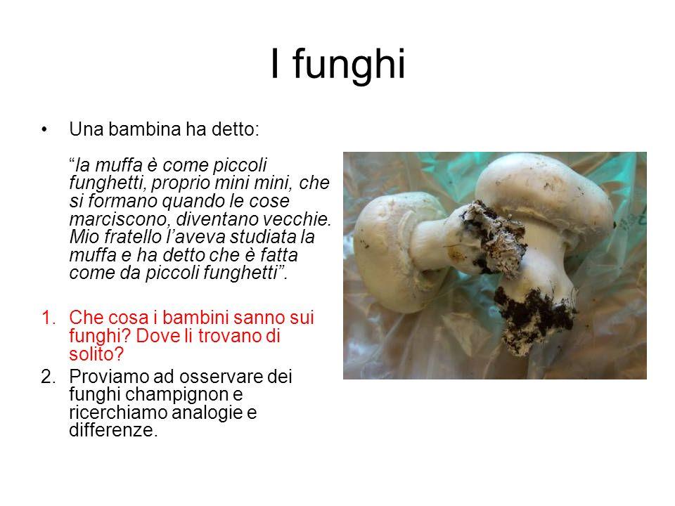 I funghi Una bambina ha detto:la muffa è come piccoli funghetti, proprio mini mini, che si formano quando le cose marciscono, diventano vecchie. Mio f