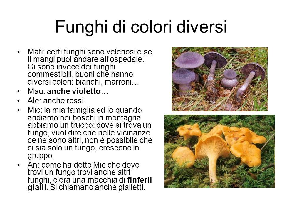Mati: certi funghi sono velenosi e se li mangi puoi andare allospedale. Ci sono invece dei funghi commestibili, buoni che hanno diversi colori: bianch