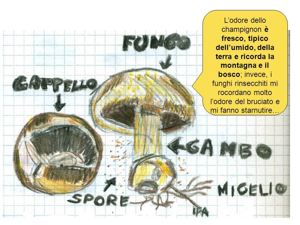 Lodore dello champignon è fresco, tipico dellumido, della terra e ricorda la montagna e il bosco; invece, i funghi rinsecchiti mi rocordano molto lodo