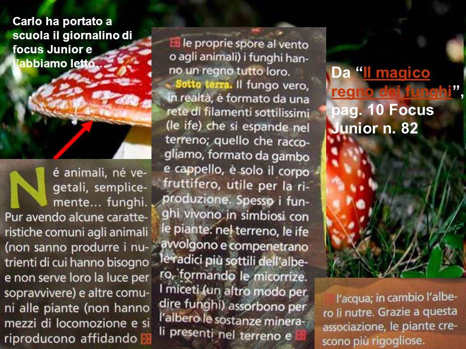 Da Il magico regno dei funghi, pag. 10 Focus Junior n. 82Il magico regno dei funghi Carlo ha portato a scuola il giornalino di focus Junior e labbiamo