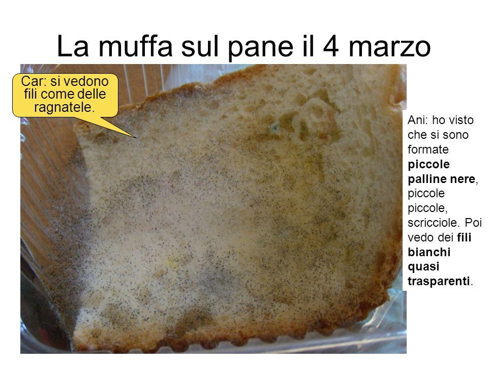 La muffa sul pane il 4 marzo Ani: ho visto che si sono formate piccole palline nere, piccole piccole, scricciole. Poi vedo dei fili bianchi quasi tras