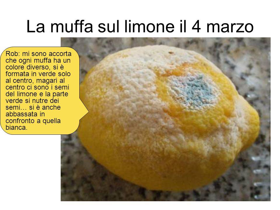 La muffa sul limone il 4 marzo Rob: mi sono accorta che ogni muffa ha un colore diverso, si è formata in verde solo al centro, magari al centro ci son