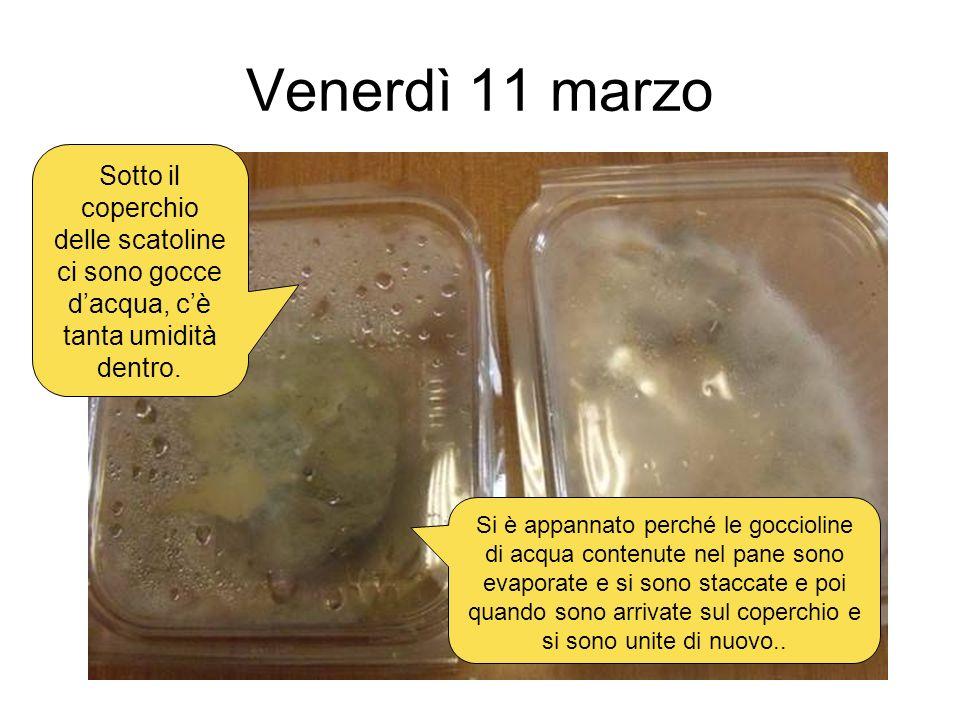 Venerdì 11 marzo Sotto il coperchio delle scatoline ci sono gocce dacqua, cè tanta umidità dentro. Si è appannato perché le goccioline di acqua conten