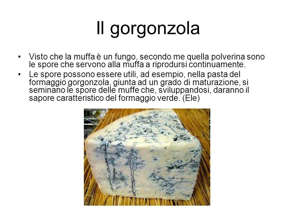 Il gorgonzola Visto che la muffa è un fungo, secondo me quella polverina sono le spore che servono alla muffa a riprodursi continuamente. Le spore pos