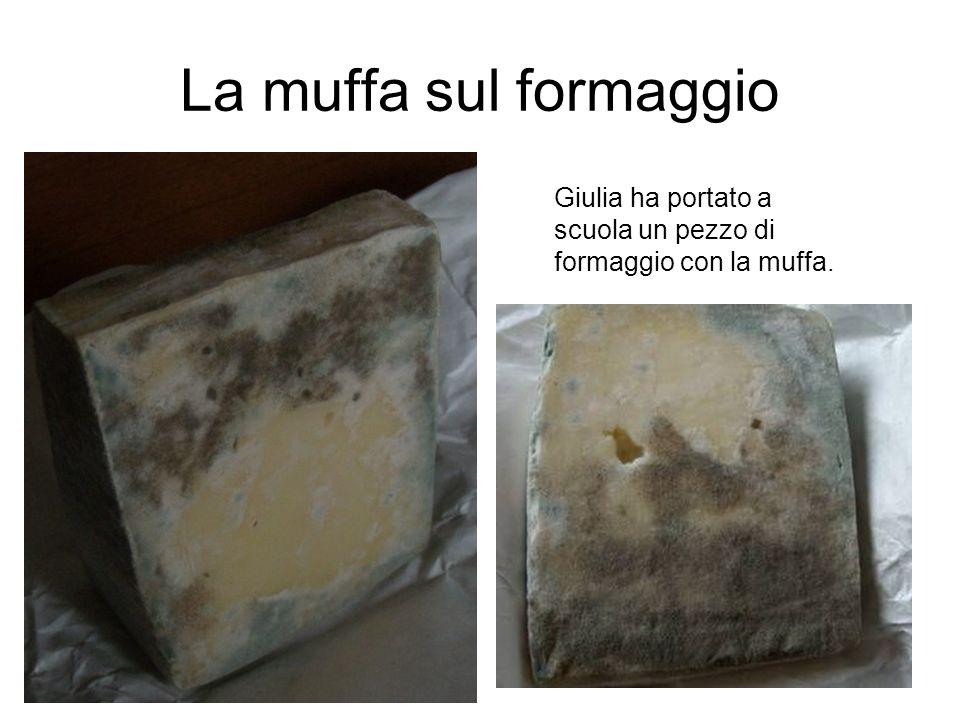 La muffa sul formaggio Giulia ha portato a scuola un pezzo di formaggio con la muffa.