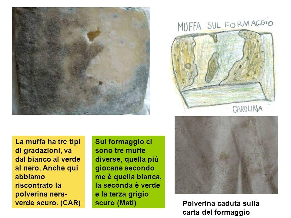 La muffa ha tre tipi di gradazioni, va dal bianco al verde al nero. Anche qui abbiamo riscontrato la polverina nera- verde scuro. (CAR) Sul formaggio
