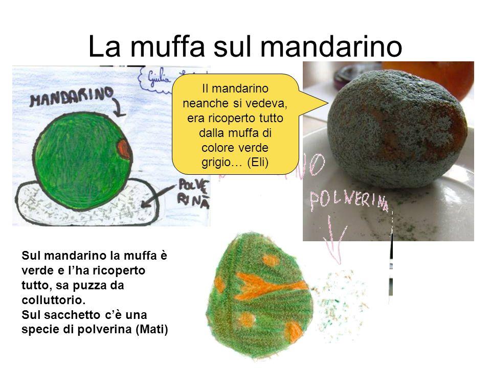 La muffa sul mandarino Il mandarino neanche si vedeva, era ricoperto tutto dalla muffa di colore verde grigio… (Eli) Sul mandarino la muffa è verde e