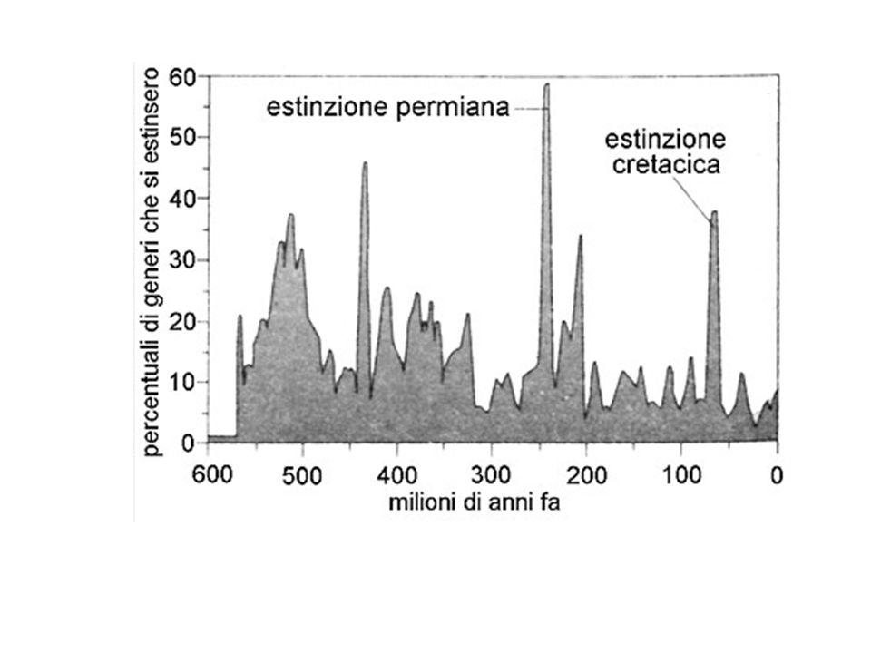 1 Estinzioni di massa 1.1 Ordoviciano superiore (circa 444 milioni di anni fa) 1.2 Tardo Devoniano (circa 375 milioni di anni fa) 1.3 Permiano-Triassico (circa 251 milioni di anni fa) 1.4 Triassico-Giurassico (circa 180 milioni di anni fa) 1.5 Cretaceo-Terziario (circa 65 milioni di anni fa) 1.6 Piccole estinzioni