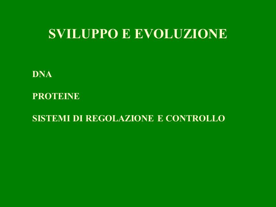 DNA PROTEINE SISTEMI DI REGOLAZIONE E CONTROLLO SVILUPPO E EVOLUZIONE