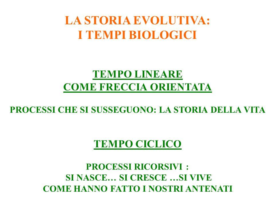 LA STORIA EVOLUTIVA: I TEMPI BIOLOGICI TEMPO LINEARE COME FRECCIA ORIENTATA PROCESSI CHE SI SUSSEGUONO: LA STORIA DELLA VITA TEMPO CICLICO PROCESSI RICORSIVI : SI NASCE… SI CRESCE …SI VIVE COME HANNO FATTO I NOSTRI ANTENATI