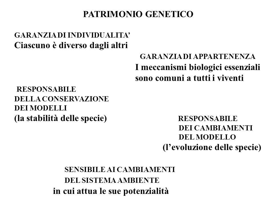 PATRIMONIO GENETICO GARANZIA DI INDIVIDUALITA Ciascuno è diverso dagli altri GARANZIA DI APPARTENENZA I meccanismi biologici essenziali sono comuni a tutti i viventi RESPONSABILE DELLA CONSERVAZIONE DEI MODELLI (la stabilità delle specie) RESPONSABILE DEI CAMBIAMENTI DEL MODELLO (levoluzione delle specie) SENSIBILE AI CAMBIAMENTI DEL SISTEMA AMBIENTE in cui attua le sue potenzialità