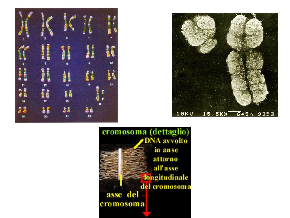 Regulation of Gene Expression Young Lab Home Page UN AMBIENTE PER I MECCANISMI DI TRASCRIZIONE
