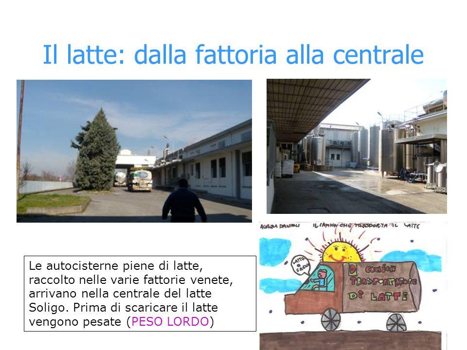 Il latte: dalla fattoria alla centrale Le autocisterne piene di latte, raccolto nelle varie fattorie venete, arrivano nella centrale del latte Soligo.