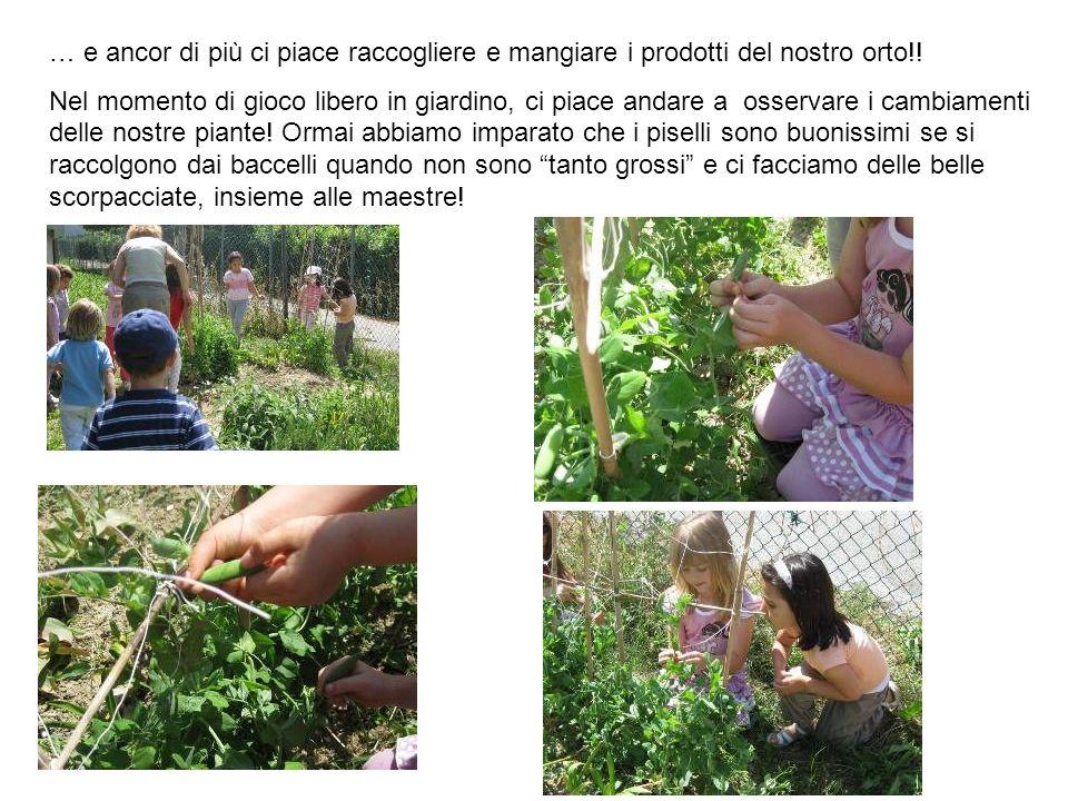 … e ancor di più ci piace raccogliere e mangiare i prodotti del nostro orto!! Nel momento di gioco libero in giardino, ci piace andare a osservare i c