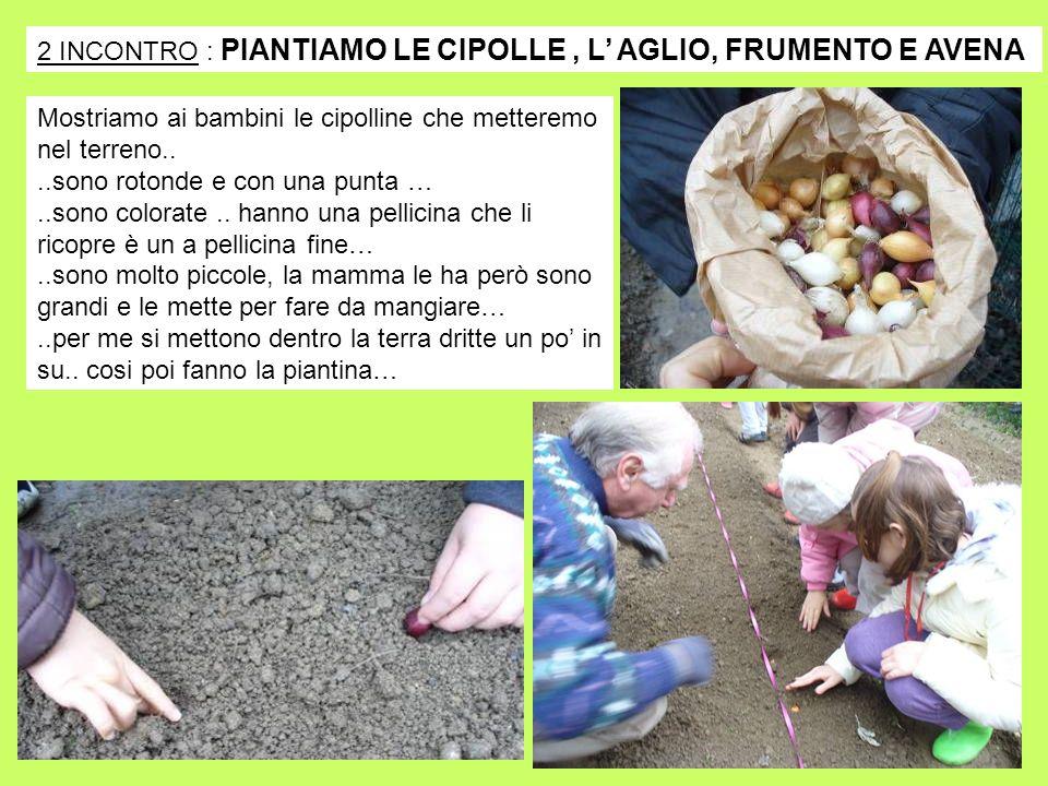 2 INCONTRO : PIANTIAMO LE CIPOLLE, L AGLIO, FRUMENTO E AVENA Mostriamo ai bambini le cipolline che metteremo nel terreno....sono rotonde e con una pun