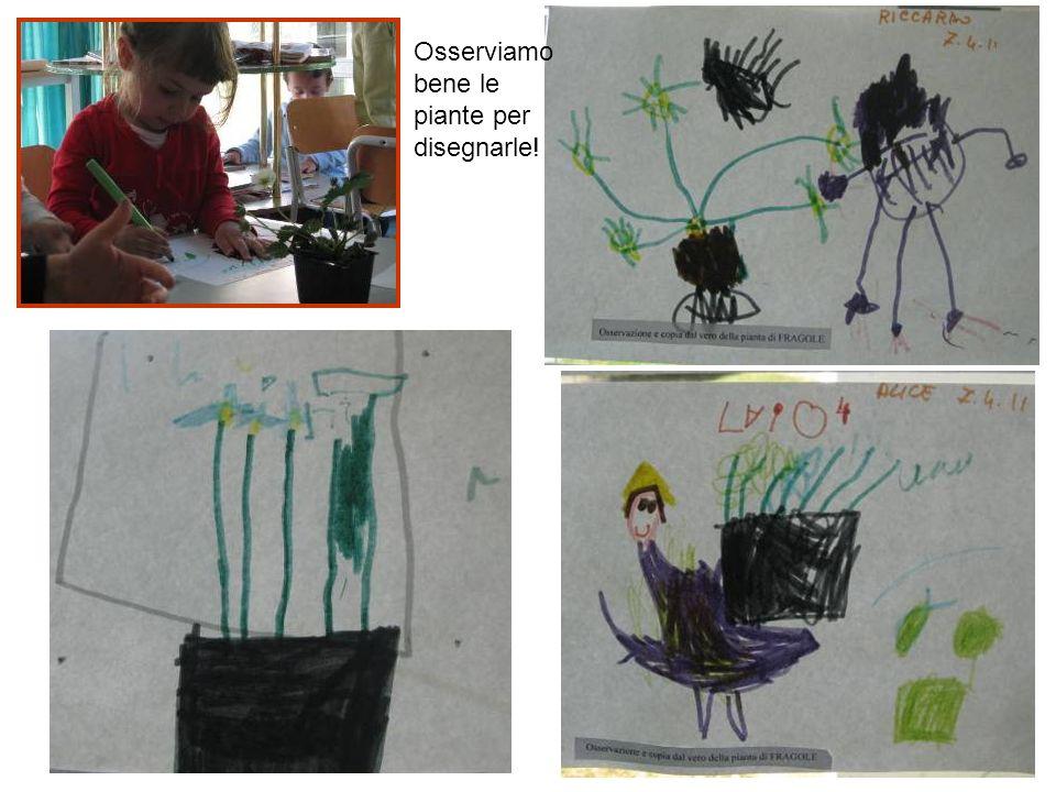 Osserviamo bene le piante per disegnarle!