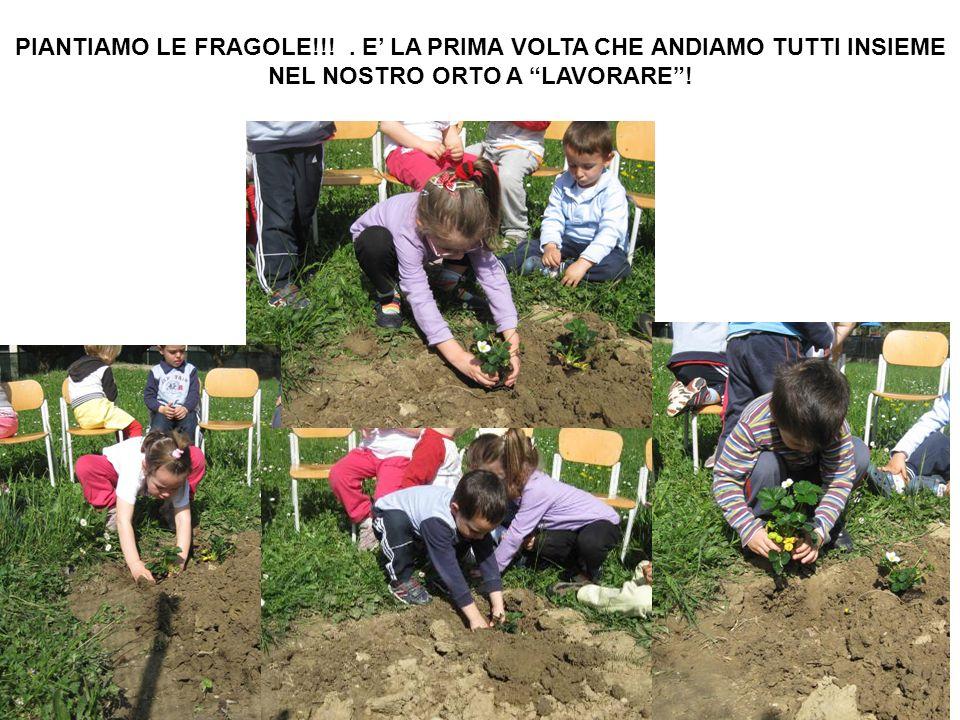 PIANTIAMO LE FRAGOLE!!!. E LA PRIMA VOLTA CHE ANDIAMO TUTTI INSIEME NEL NOSTRO ORTO A LAVORARE!