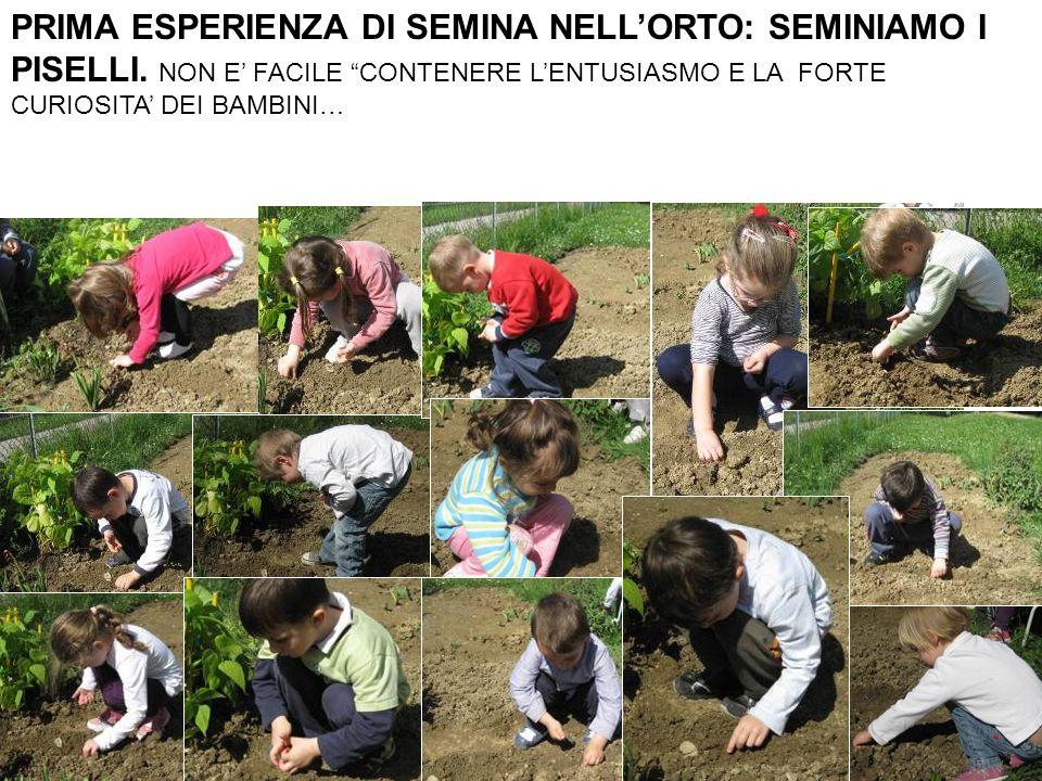 Frasi dei bambini durante questa esperienza: ERZA: sono i semi che abbiamo già seminato dentro ai vasetti in classe… nel cotone e terra… AURORA C: erano nate le piantine.
