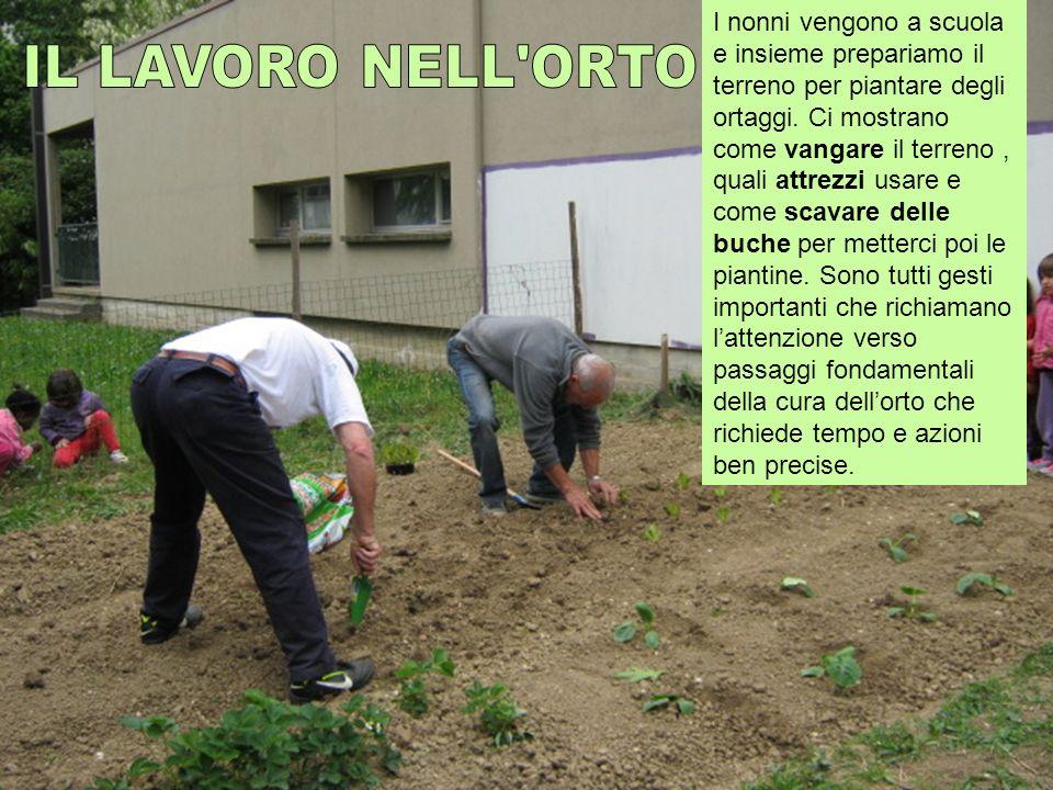 I nonni vengono a scuola e insieme prepariamo il terreno per piantare degli ortaggi. Ci mostrano come vangare il terreno, quali attrezzi usare e come