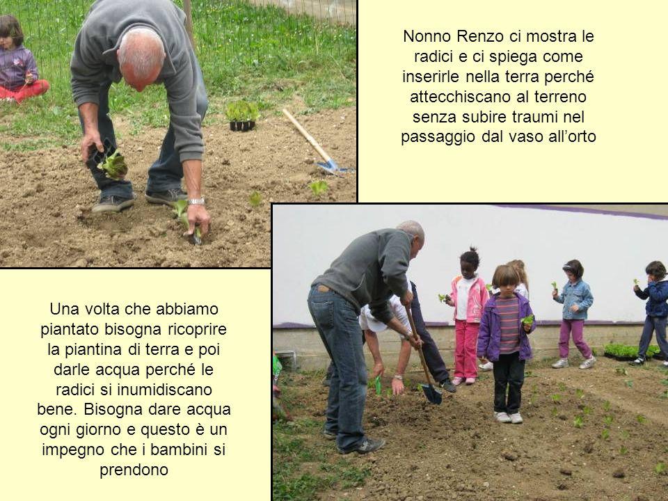 Nonno Renzo ci mostra le radici e ci spiega come inserirle nella terra perché attecchiscano al terreno senza subire traumi nel passaggio dal vaso allo