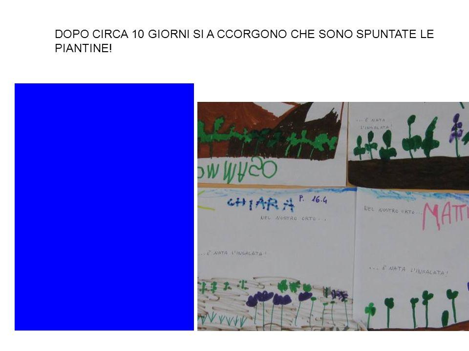 DOPO CIRCA 10 GIORNI SI A CCORGONO CHE SONO SPUNTATE LE PIANTINE!