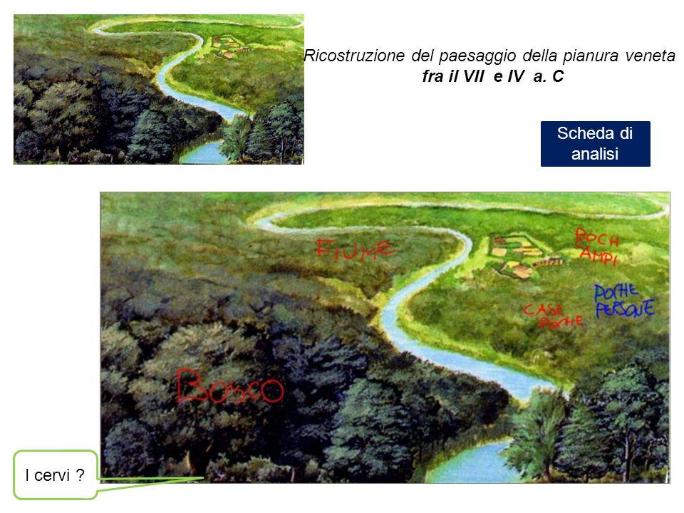 I cervi ? Ricostruzione del paesaggio della pianura veneta fra il VII e IV a. C Scheda di analisi