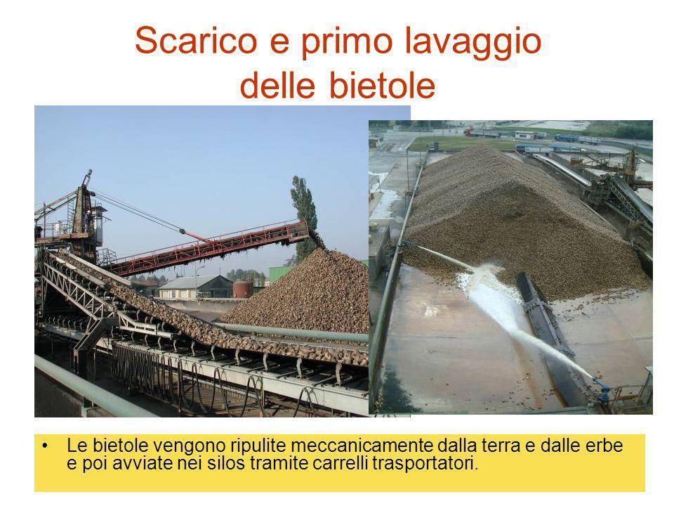 Scarico e primo lavaggio delle bietole Le bietole vengono ripulite meccanicamente dalla terra e dalle erbe e poi avviate nei silos tramite carrelli tr