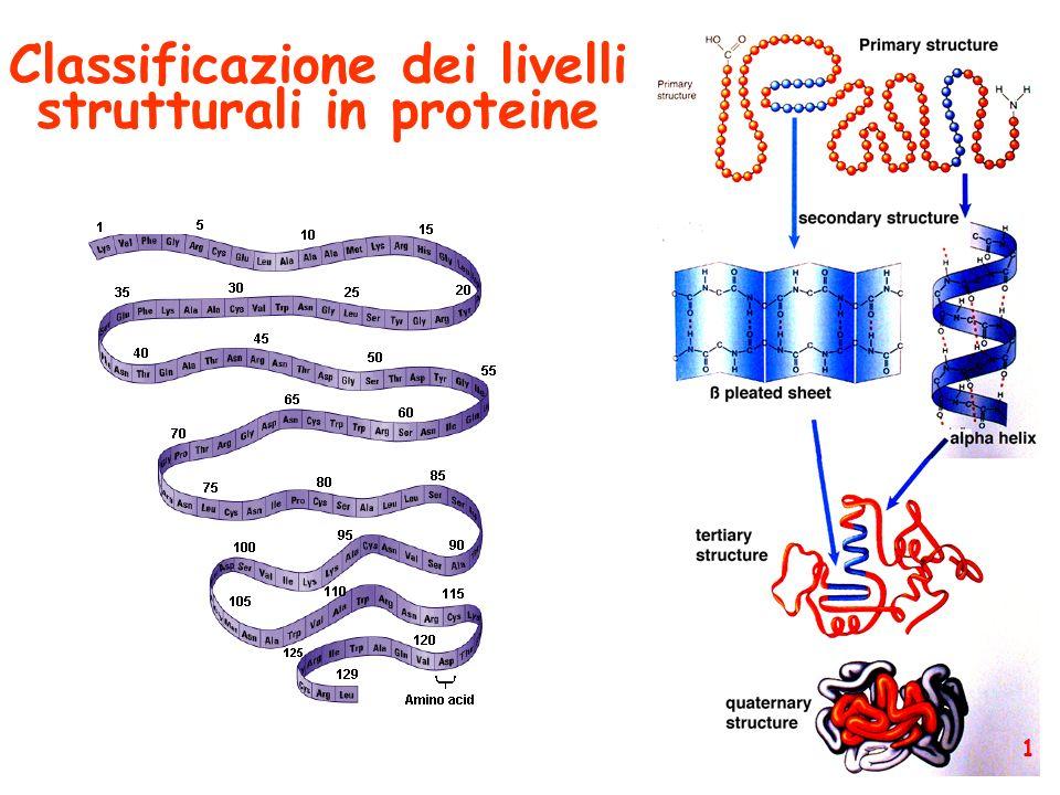 Struttura primaria (sequenza amminoacidica) 2