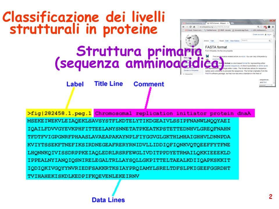 Piruvato chinasi Enzima bifunzionale PRA-isomerasi IGP-sintetasi 33